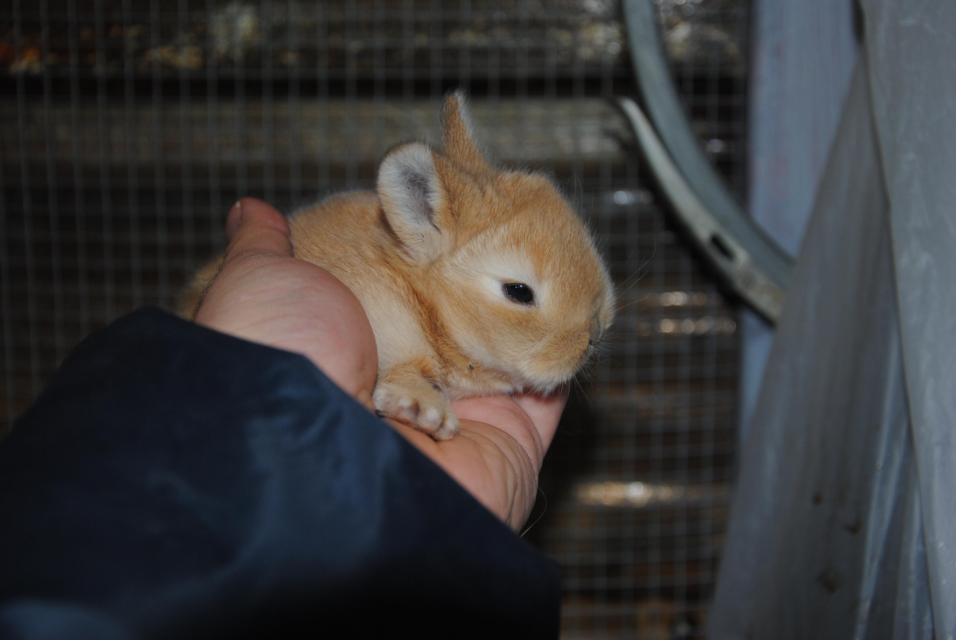 Coniglio nano colorato - Lettiera coniglio nano ...