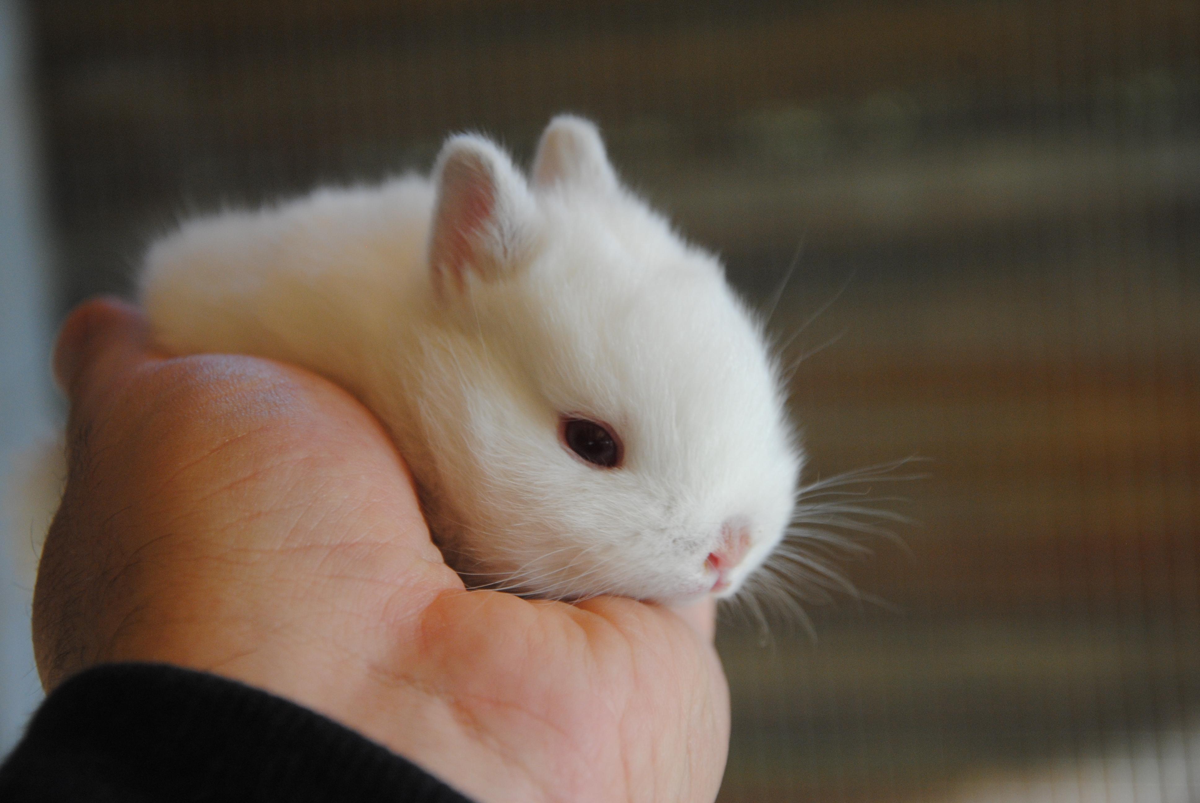 Come non amare questi teneri coniglietti appena nati?