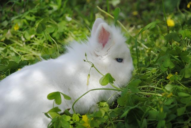 I nostri conigli riproduttori allevamento conigli - Nomi ragazze diva futura ...