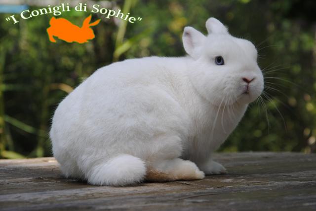 I nostri conigli riproduttori allevamento conigli for Diva futura sito